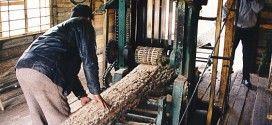 Бизнес идея: открываем лесопилку