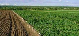 Выращивание картофеля, как бизнес