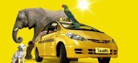 Выгодный бизнес: как открыть «Такси»