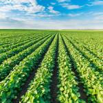 Городское земледелие вместо сельского хозяйства