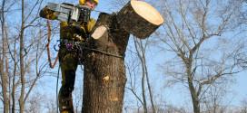 Бизнес идея: удаление и обрезка деревьев