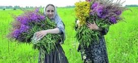 Бизнес на лечебных травах