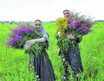 Бизнес на выращивании лекарственных растений 48