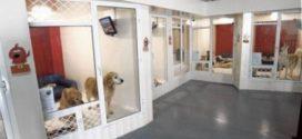 Бизнес идея — открытие гостиницы для животных